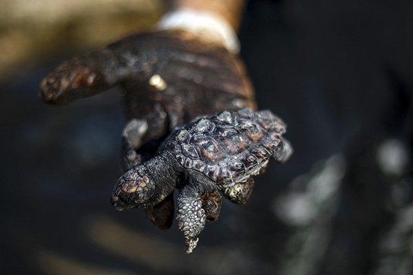 tartaruga petrolio israele
